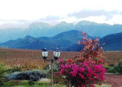 19 marbrin Olive farm, scenery