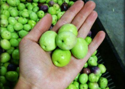 4 Marbrin Olive Farm